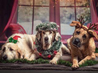 5 Gründe, weshalb dieses Weihnachten richtig schön wird!